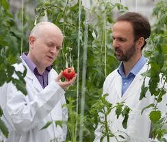 Efectos positivos del tomate