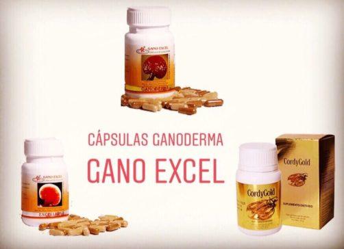 Capsulas Ganoderma