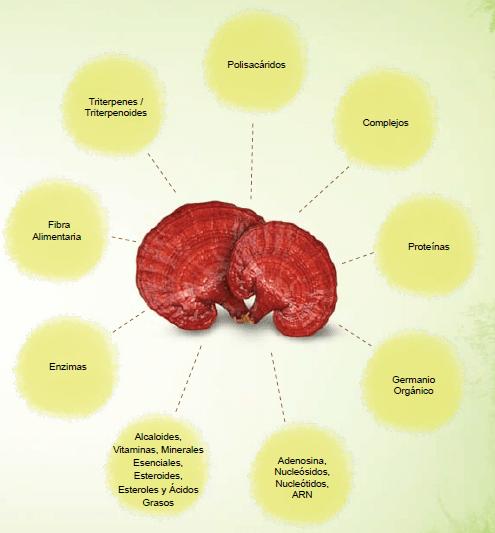 Reacciones al tratamiento con Ganoderma Lucidum